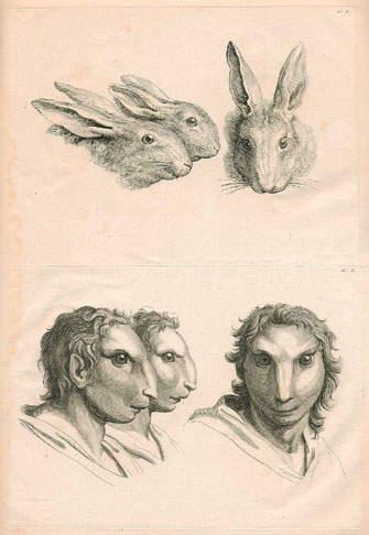 如果人类由兔子进化的 会变成《疯狂动物城》吗