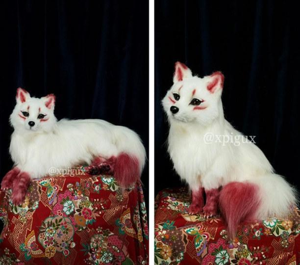 狐狸猫图片大全可爱