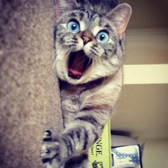 貓咪就是網路界的偶像、瀏覽量的保證,雖然不知道為什麼網路上貓咪就是比較紅,所謂人外有人、天外有天~貓外也有貓(亂說)平平都是貓,但也不是每隻貓都能叱吒網路界,以下是老外選出《網路上最火紅的10隻貓》,應該是各位貓奴們很眼熟的名單溜~ 丸子貓MARU  吼前陣子去逛書店一直看到MARU的年曆一直在誘惑著我.
