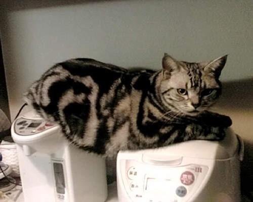 萌物系列 冬天时猫猫可爱又可怜的取暖方式~~请多注意