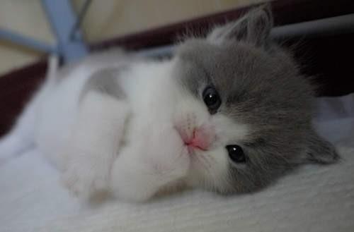 猫猫崩溃图片可爱