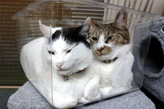 (伪)系列 超(yi)级(dian)劲(dou)爆(bu)可爱的猫咪们