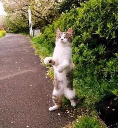 """萌物系列 动物的优势就是""""只要他们站起来就已经很可爱了!"""