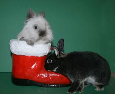 萌物系列 小动物们穿上靴子都是什么样子呢