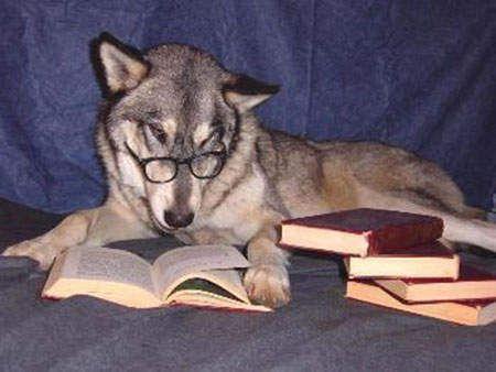 原来动物看书也会睡着啊~和我一样嘛