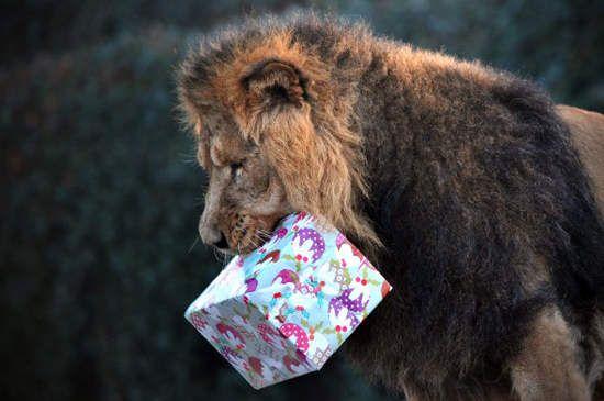 动物收到圣诞礼物时候的表现